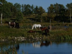 Horses at the lake